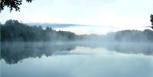misty fog kimcronin