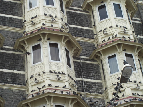 Pigeons of the Old Taj Mahal hotel (Say a Prayer) | by Swami Stream