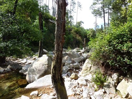 Arrivée au ruisseau de Peralzone (vue vers l'aval)