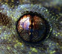 Eye of Newt