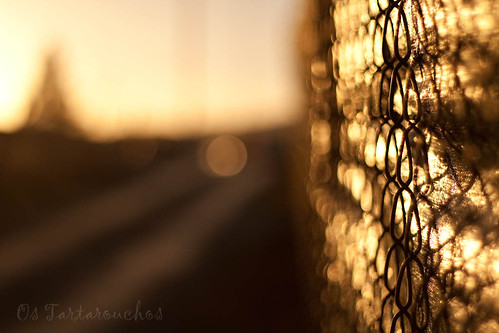 the golden fence | by Os Tartarouchos