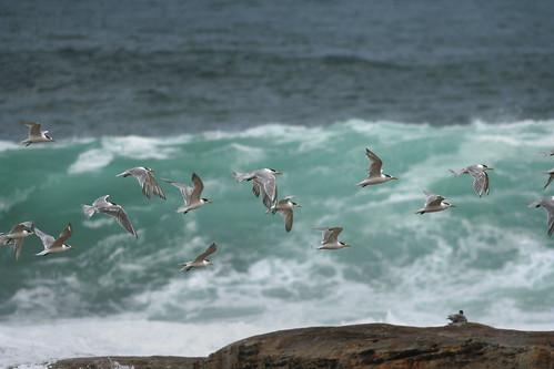 Freak Wave and Birds