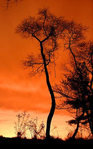Salmon Sky | by Furryscaly