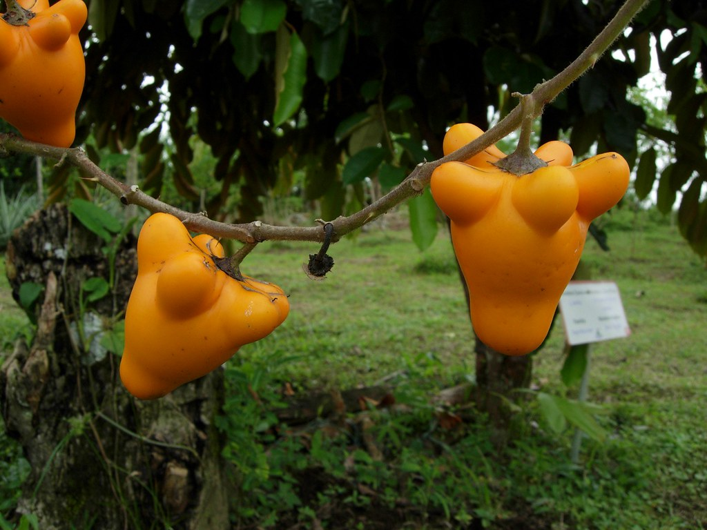 Funny Looking Plants On The Grounds Of Arenal Springs Reso Flickr