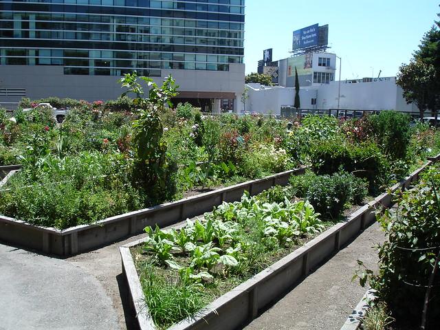 Alice Street Community Gardens: a nice little co-op garden