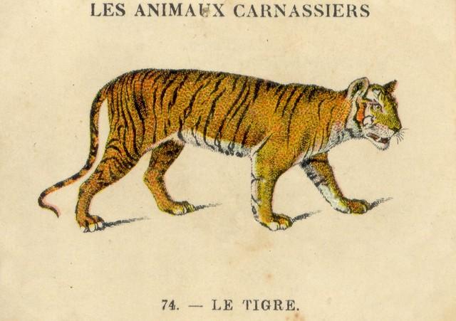 casino tigre