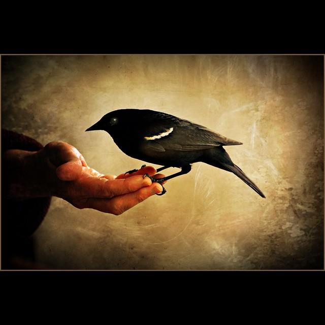 loving hand . . .