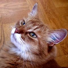 Cute cat | by Per Ola Wiberg ~ Powi