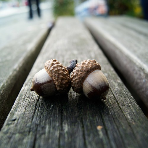 Acorns | by Kaloer