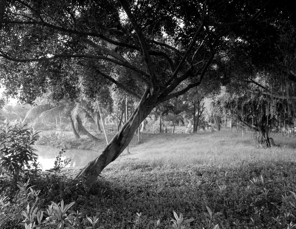 thailandtrees-3