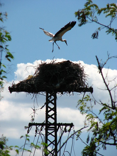 Stork Nest | by lorentey