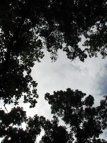 Trees of Beaver Lake | by raveller