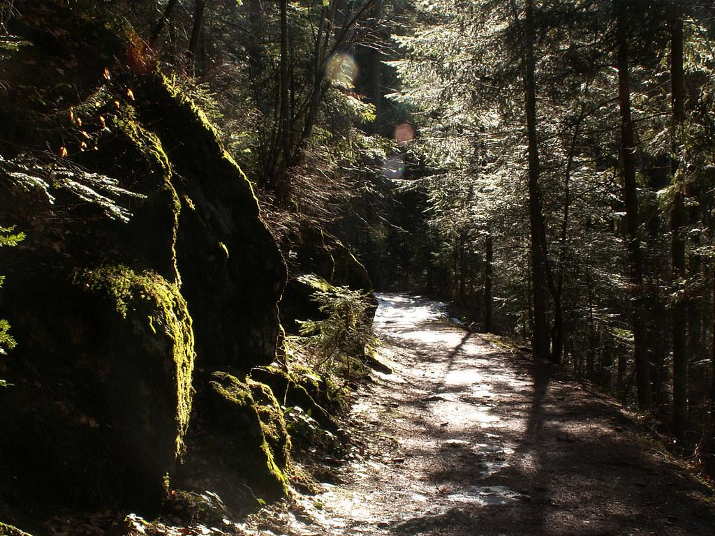 Paseo por la Selva Negra