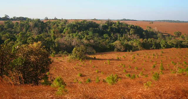Plantations and riverine forest