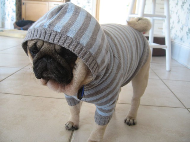 Gizmo modeling a GAP sweater from Paris