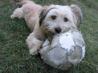 Soccer dog | by Kate James