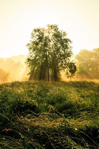 usa mist fog sunrise morninglight oak pennsylvania meadow sunrays oaktree sunbeams morningfog bowmansville dewongrass