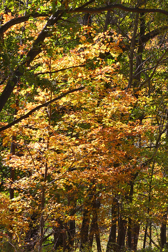 Western Maryland, Frostburg 16 Oct 2010 (23) | by smata2