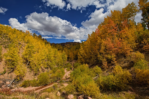 autumn color fall nature yellow clouds creek forest landscape gold vanishingpoint nikon colorado stream path co aspen depth 67 cloudscape pathway teller 2010 converginglines clff pikespeaknationalforest highway67 nikon1735 d700