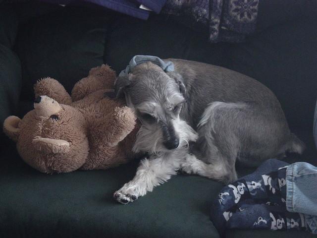 Hans with Betsy's teddy bear