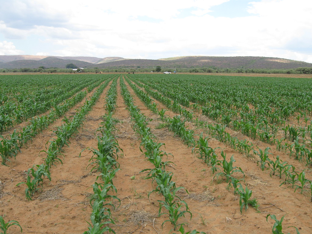 Spaniolii își prezintă strategiile pentru obținerea de plante tolerante la secetă