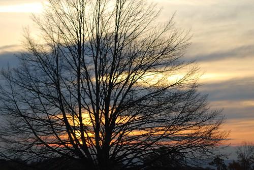 sky tree sunrise 365