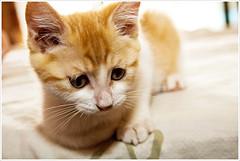 Cat | by vincent.chen