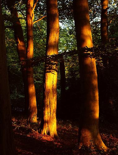 wood light photography dawn topf50 bravo topv999 algo naturesfinest 50f flickrsbest 25faves 200750plusfaves treesubject