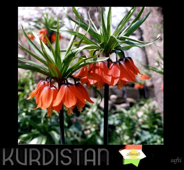 kurdistan  Çawkal