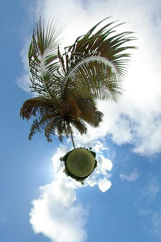Palm tree | by gadl