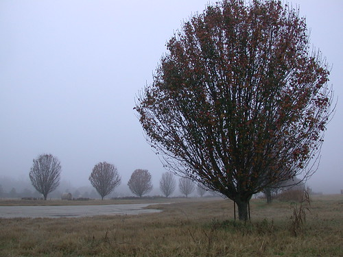 morning fog rural landscape texas foggy richmond pasture hay bale mu countryroad bradfordpeartree