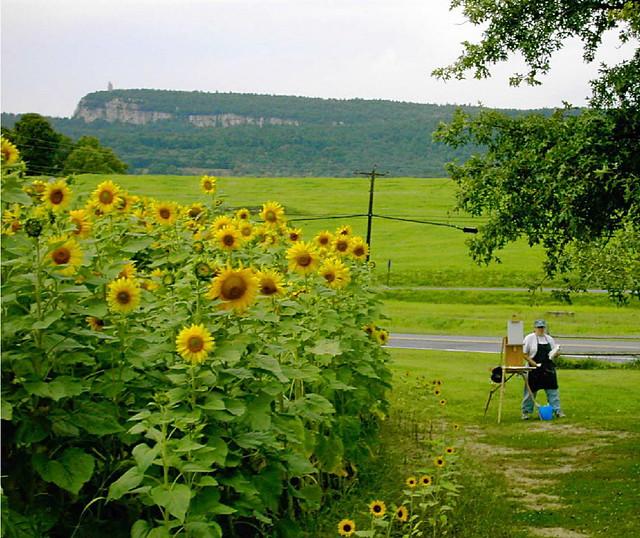 Sunflowers New Paltz