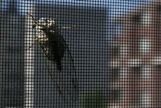 cicada on screen | by thisistami