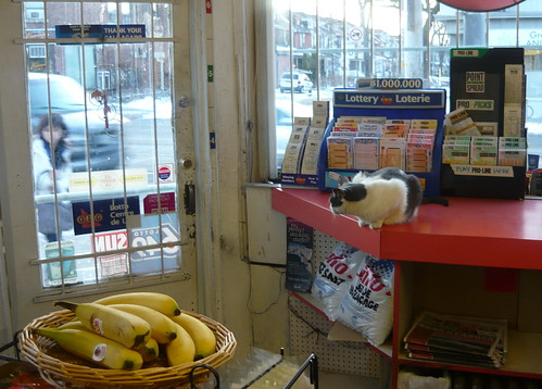 cat and bannanas, local variety store | by PinkMoose