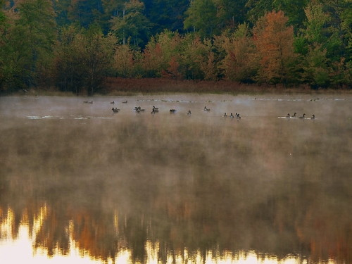 morning mist water sunrise pond maryland waterfowl canadageese cedarvillestateforest