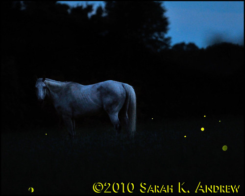 sunset summer horse white field grey twilight gray solstice pasture firefly grazing graze gloaming fireflies ska6342