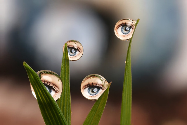 Ever get the feeling you are being watched ? Dewdrop refraction