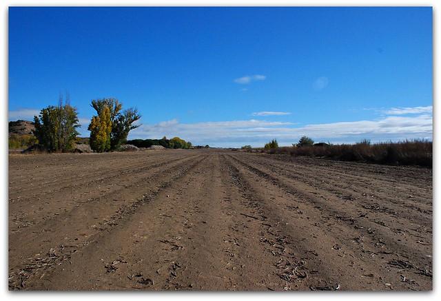 Un buen lugar para la siembra en Nuevos Naharros.