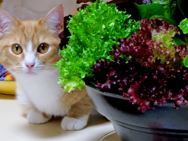 i swear i am not eating the lettuces....