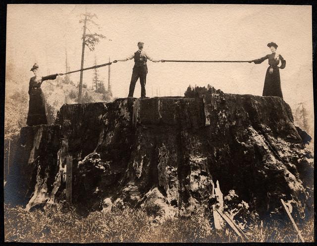 Fieldbrook stump in California