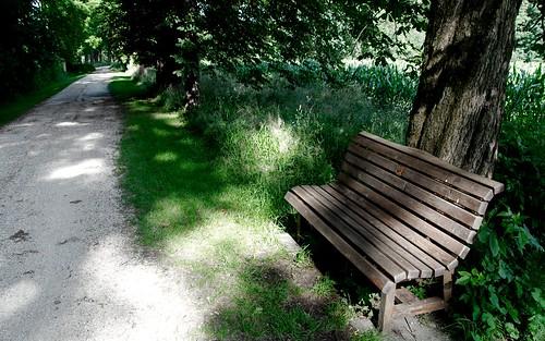 trees way break bank pause bäume weg 20070617