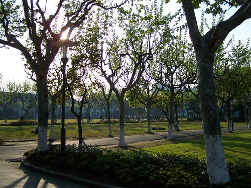 The trees in Spring