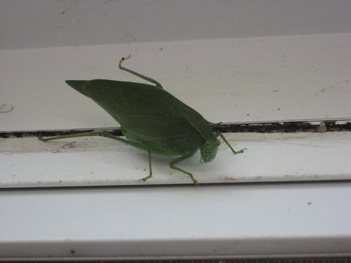 Big green bug | by TheKarenD