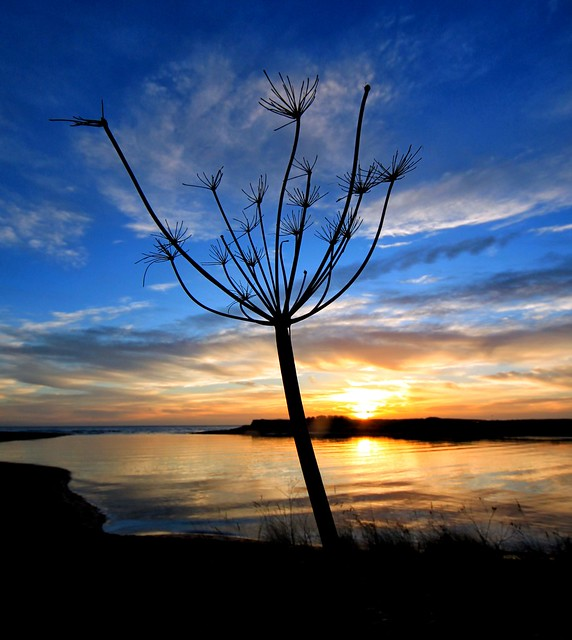 Donmouth Sunrise