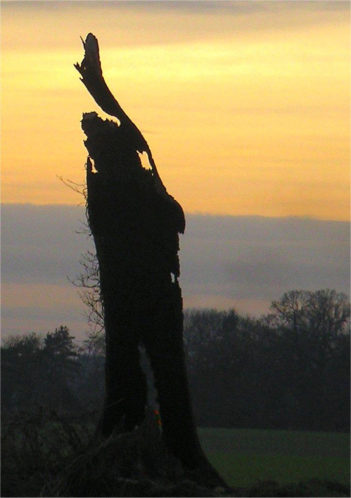 Book 2, Walk 5c, Tring to Berkhamsted 3 27 December 2004
