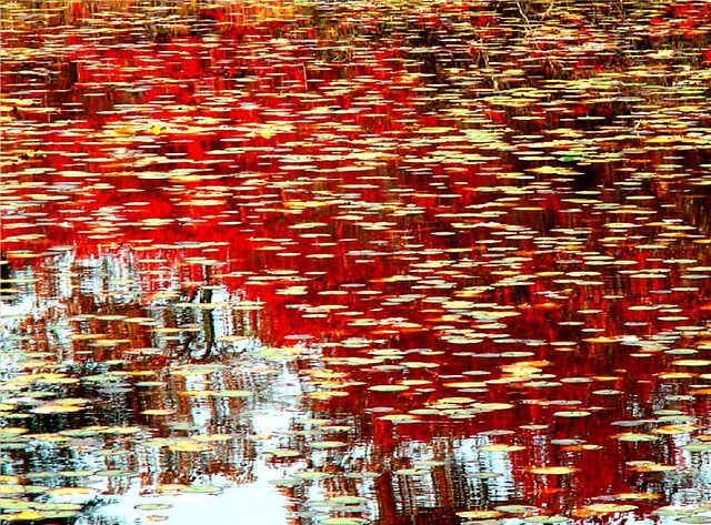 Red Fall Leaves Reflecting