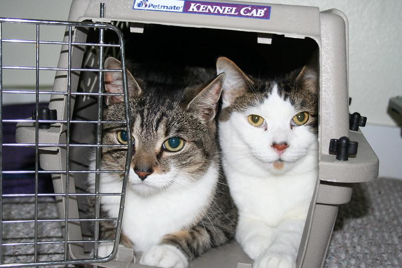 Terrified Cats