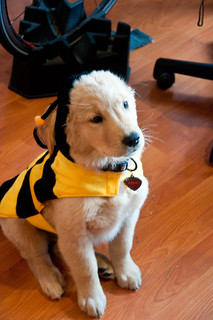 Sadie the Bumble Bee | by meeghead