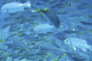 School of Fish | by bbum
