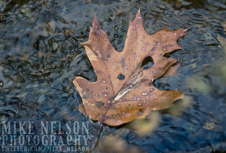 Leaves in the Water | by Anamorphic Mike